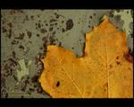 Fall on earth