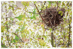 spring blossom by petrova