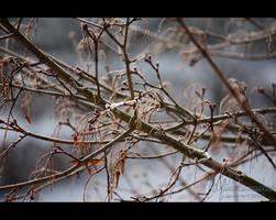 Winter's shiver by petrova
