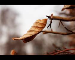 Moment by petrova