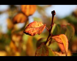 Fall fire by petrova