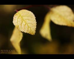In the still by petrova