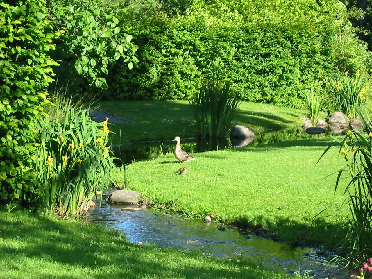 Green Garden By Petrova On DeviantArt
