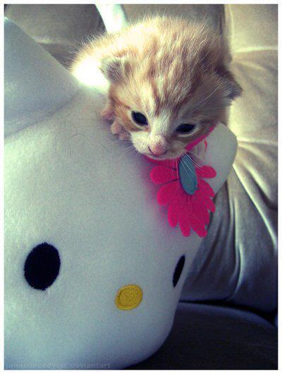 25 30 Helloo: Cat Hello Kitty By MFSyRCM