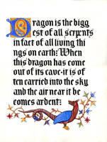 dragon - gothic calligraphy by yachaku