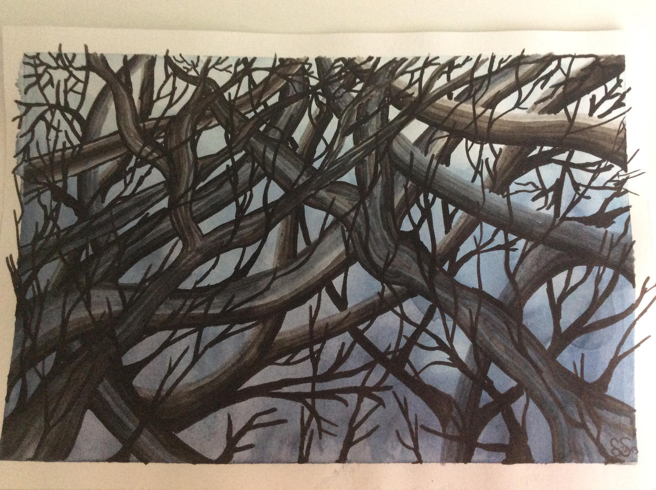 Branches over a nightsky