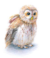 Tawny Owl by Thinderil