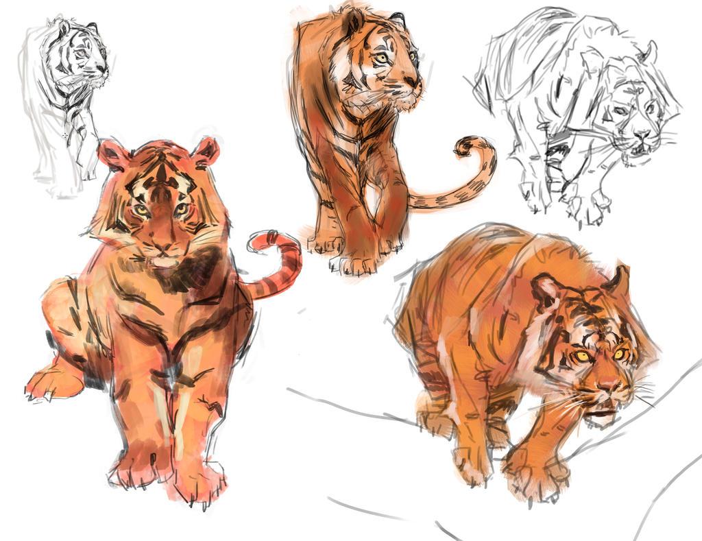 Tiger studies by medders on deviantart tiger studies by medders tiger studies by medders thecheapjerseys Image collections