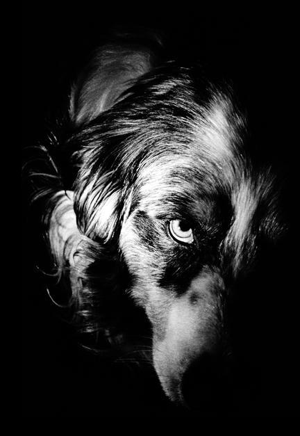 -Kenzo Teruaki. The_Dog