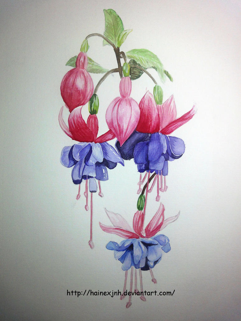Fuchsia Watercolor Sketch By HaineXjnh On DeviantArt