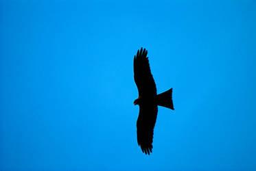 Eagle 2 by nainasamima