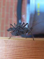 More bug stuff by Dietuckerdie