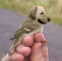 dog bird mix by kirby8food
