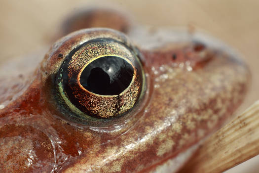 frog1596