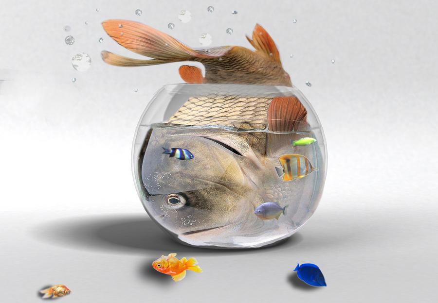 Fat fish by yuki satoshi on deviantart for Is fish high in cholesterol