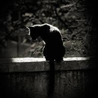 cat by anjelicek