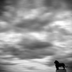Lion and Clouds