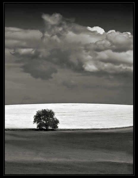 The Tree by anjelicek