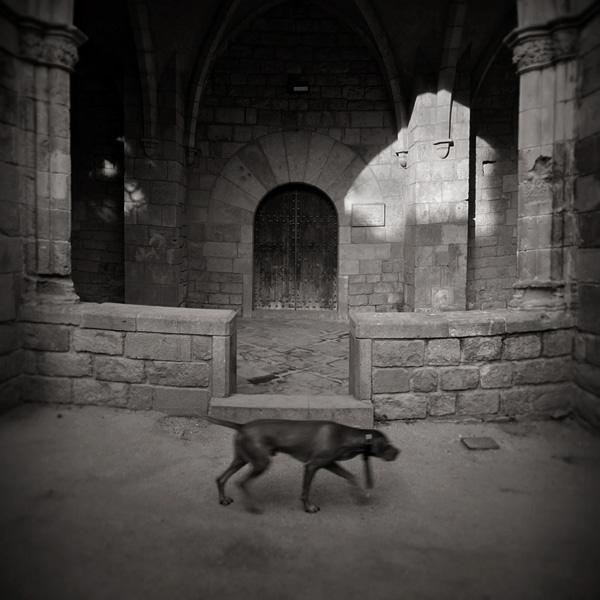 walkdog by anjelicek