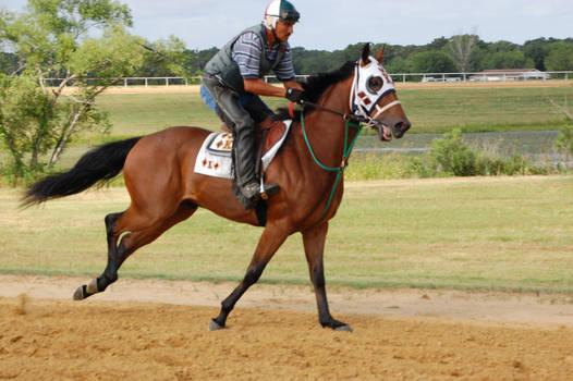 Racehorse 4