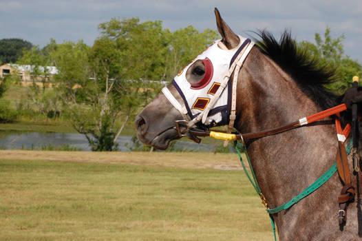 Racehorse 8