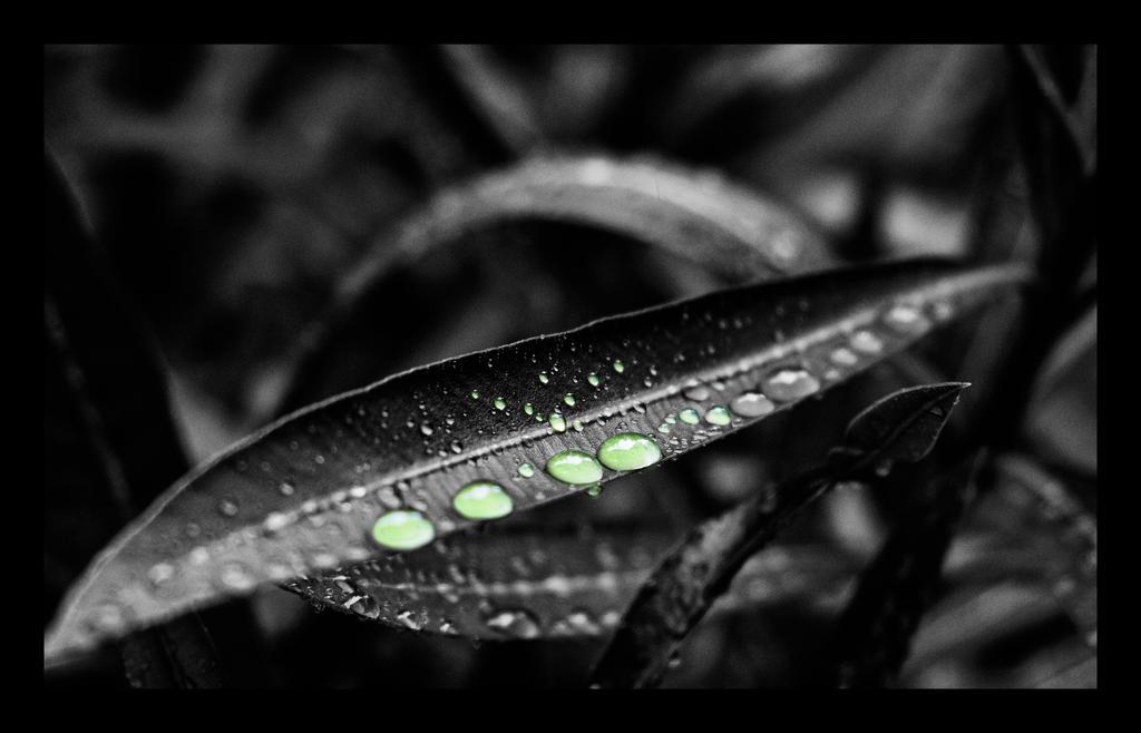 Speranza... by Blakk-mamba