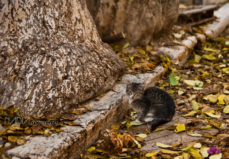 Purring Kitty by badnan