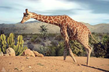 Free Giraffe