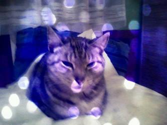 Bokeh kitty by snowyraspberry