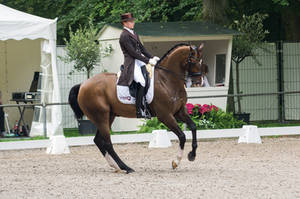 Dressage Stock - V by Summerly
