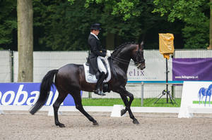 Dressage Stock - VI by Summerly