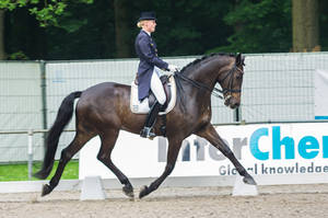 Dressage Stock - X by Summerly