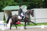 Dressage Stock - XIV by Summerly