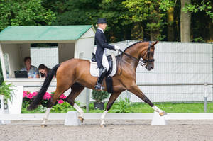 Dressage Stock - XVI by Summerly