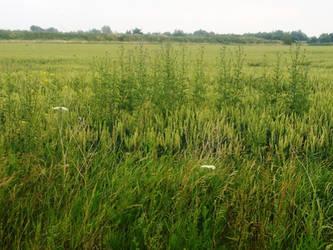 countryside herbs by matmohair1