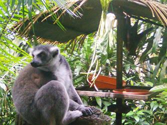 Lemur and Fruit bat by matmohair1