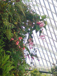 Cloud Mountain - inside the flower dome by matmohair1