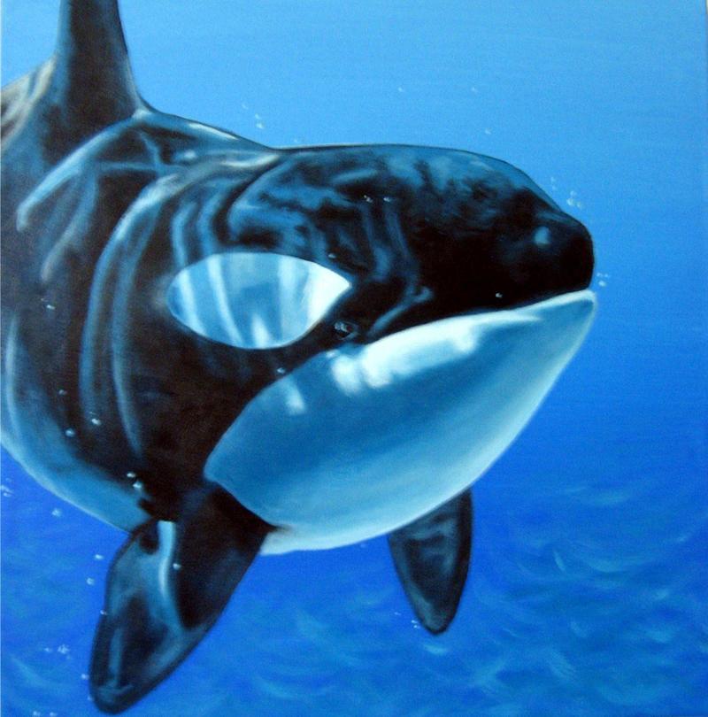 Killer whale  my favorite by jc2thew
