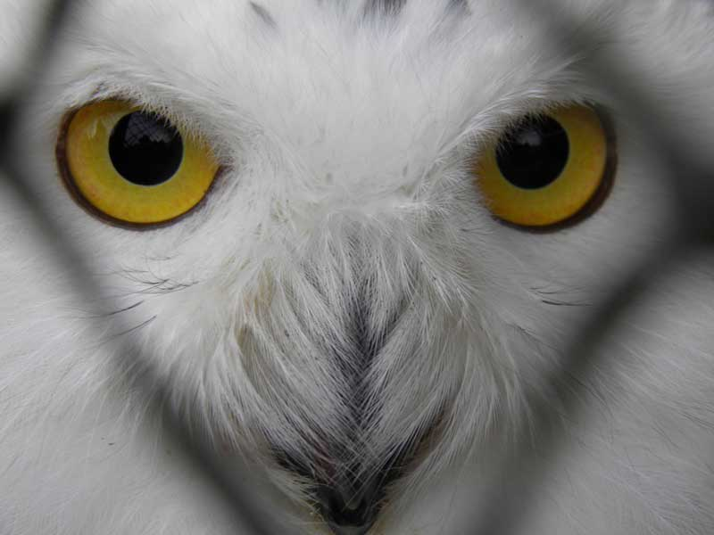 yellow eyes - photo #37