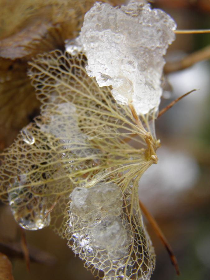 Winter butterfly by JanuaryGuest