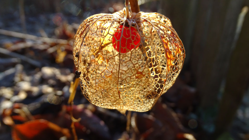 Winter lantern by JanuaryGuest