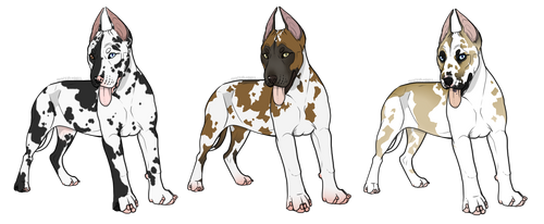 Harlequin Dane Puppy Adopts- Closed