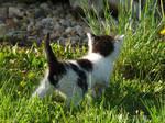 Kitten by ShadowinLight