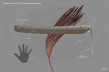 Fish and Kelp