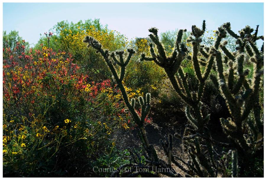 Desert Delight by acutely