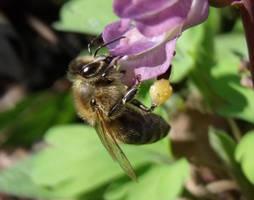 Bee by Sadova302b50
