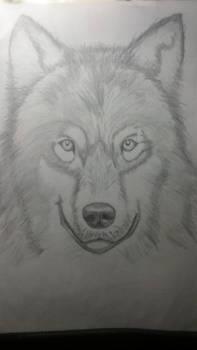 Wolf - pencil practice #3