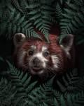 Cute Red Panda by arizrab