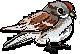 Little American Bird by FlyingGuardianFish