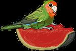 Little WaterMelon Bird f2u